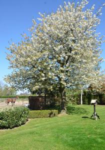 Sonnen-tree